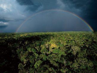 L'état de l'Amazonas au Brésil