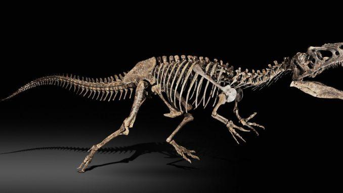 "Le squelette du dinosaure ""Zarafasaura Oceanis"" restitué au Maroc"