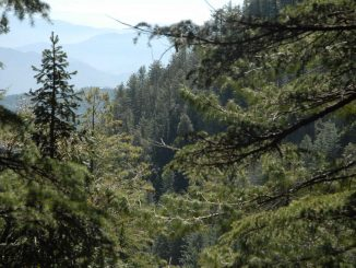 Domaine forestier au Maroc
