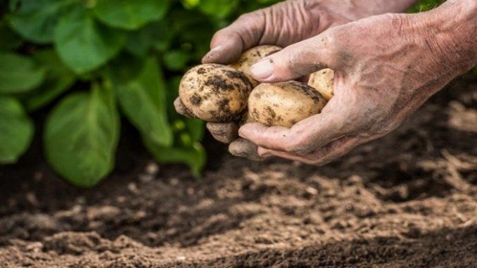 l'agriculture fasse partie des plans nationaux d'adaptation