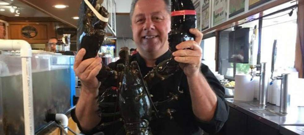 Un homard retrouve l'océan après a 20 ans de captivité dans l'aquarium d'un restaurant