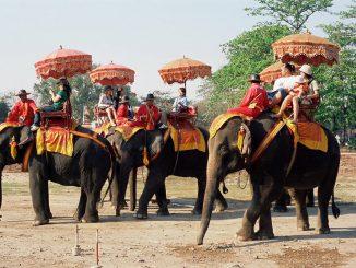 L'ONG Word Animal Protection juge la situation des éléphants à touristes inacceptable
