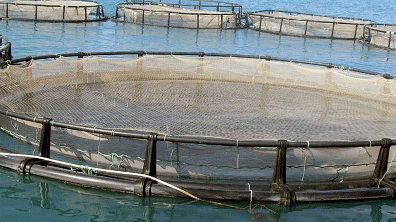 Aquaculture Maroc