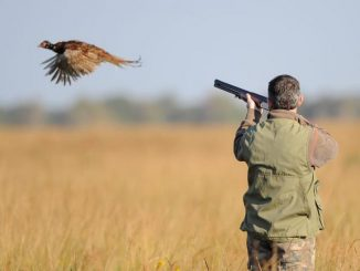 La saison de la chasse est déclarée ouverte