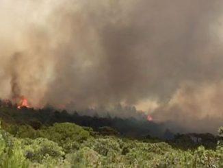 L'incendie de forêt à Tanger est sous contrôle
