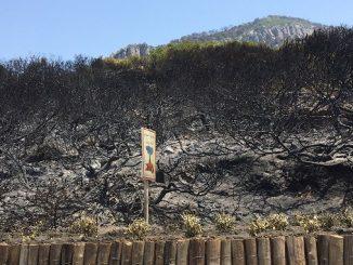 L'incendie de forêt près de Tanger maitrisé