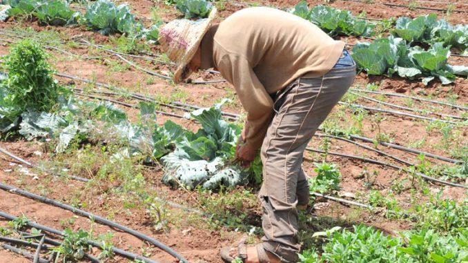 Agriculture solidaire : Lancement de plusieurs projets dans l'oriental