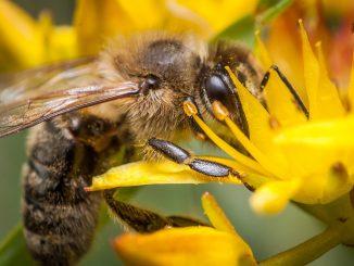L'apiculture à l'honneur dans le cadre du programme IPAMed