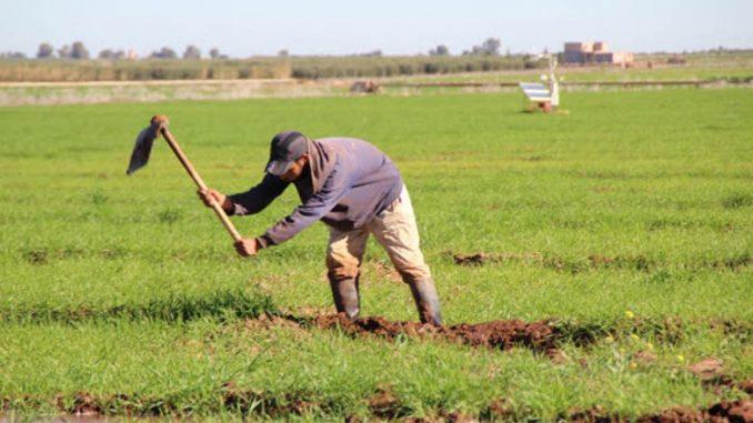 Les conseillers agricoles auront leur fédération (La FICAP)
