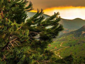 الغابات المستدامة