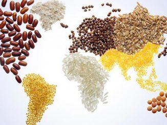 FAO : C'est la journée mondiale de l'alimentation