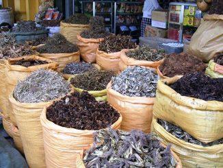 Taroudant accueille son 1er festival des plantes médicinales et aromatiques