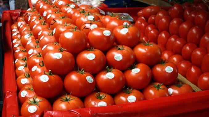 Agriculture baisse des exportations de tomates for Vers dans les tomates