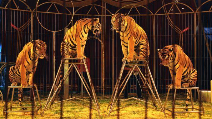 L'Irlande interdit l'emploi d'animaux sauvages dans les cirquesd'animaux sauvages dans les spectacles de cirque à partir du 1er janvier 2018, actant ainsi un large mouvement contre la pratique