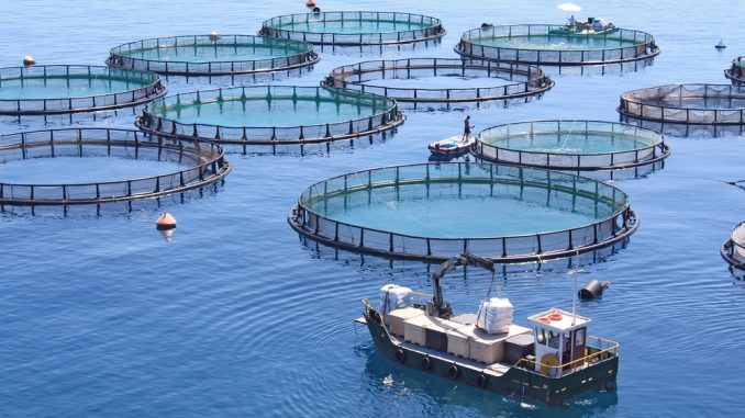 Aquaculture marine marocaine