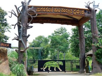 le parc national Bandipur à Karnataka