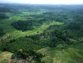La Côte d'Ivoire perd 200.000 hectares de forêts chaque année