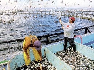 La FAO et l'ANDA organisent un atelier pour le développement durable de l'aquaculture au Maroc