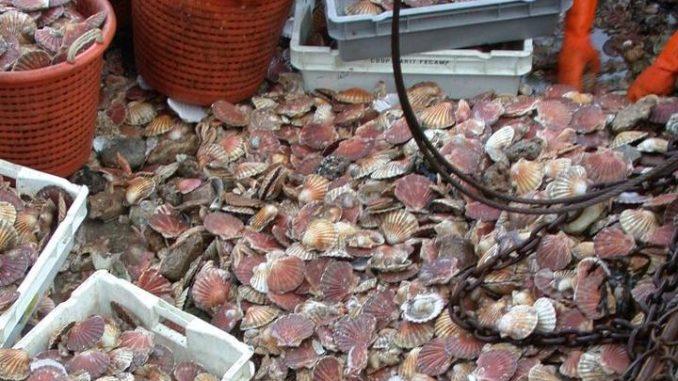 Des coquillages toxiques dans les régions de Tétouan/Chefchaouen