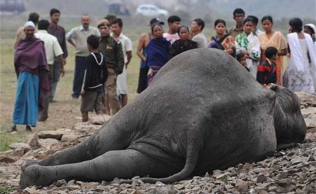 Inde : quatre éléphants tués dans une collision avec un train