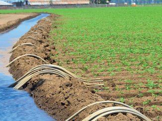 Eau : La nappe phréatique marocaine a-t-elle été contaminée par des résidus de pesticides?