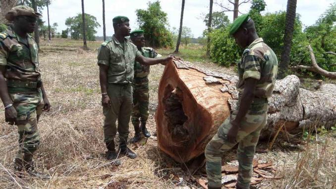 Sénégal : le ministre de l'Environnement et du Développement durable dénonce la coupe du bois