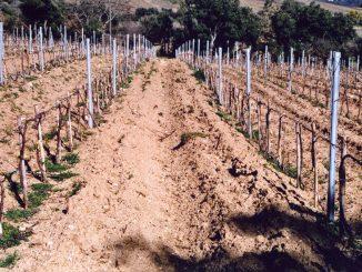 Alerte sur la dégradation des sols et son impact sur les humains