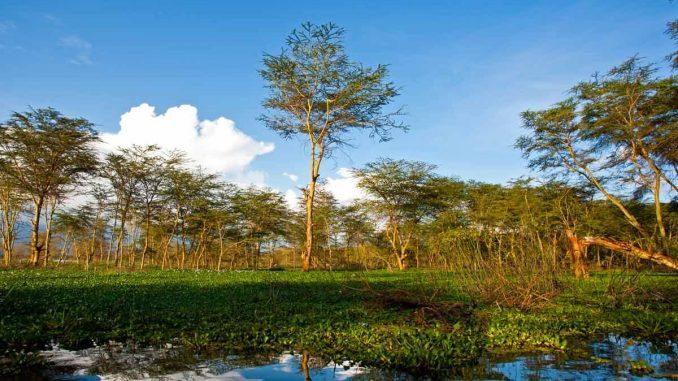 Lac de Naivasha au Kenya