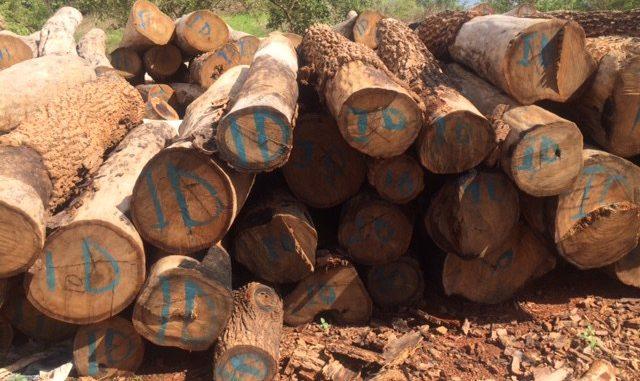 La coupe du bois au Sénégal
