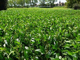 La France veut plus de protéine végétale dans ses champs et ses étables