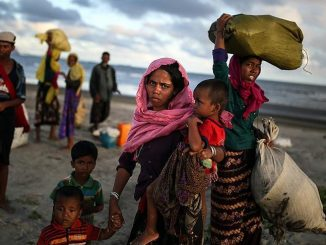 Dix réfugiés rohingyas tués par des éléphants au Bangladesh