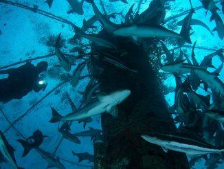 Sidi Ifni : Une journée portes-ouvertes sur les opportunités d'investissement en aquaculture