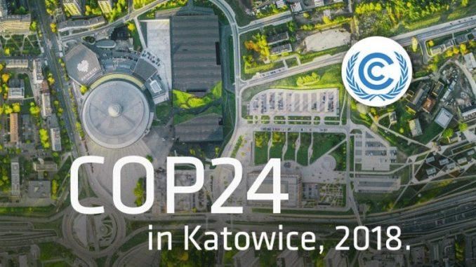 Forêt de Bialowieza : la Pologne enfreint la loi selon la justice européenne
