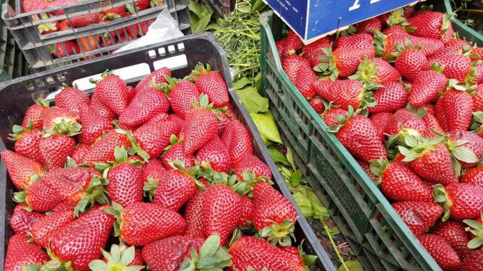 Moulay Bousselham: Coup d'envoi de la 8ème édition du Festival de la fraise