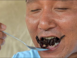 Au Cambodge, les tarentules, victimes de la déforestation et des gastronomes