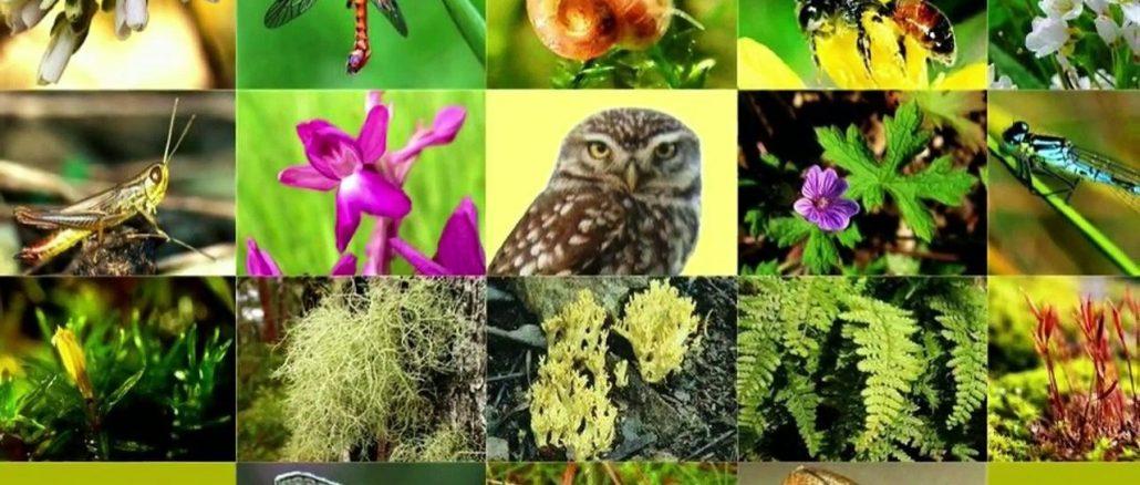 22 mai : Journée internationale de la diversité biologique