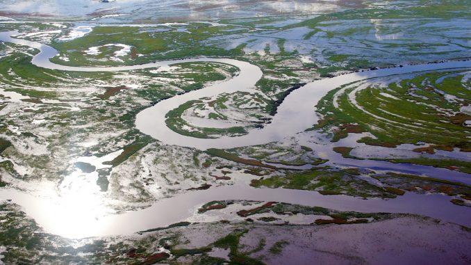 biodiversité dans la région du bassin du Congo