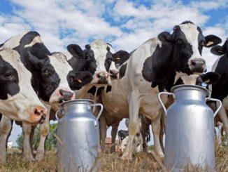 élevage laitier durable