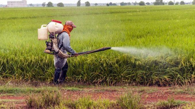 Le Sénégal envisage de mettre en place un Comité national de gestion des pesticides