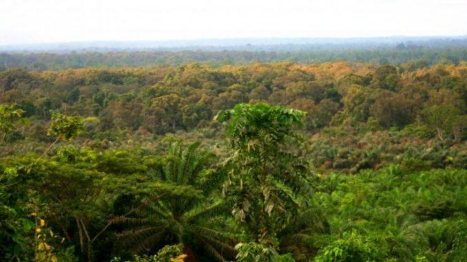 Le Ghana a perdu la moitié de sa forêt depuis l'an 2000