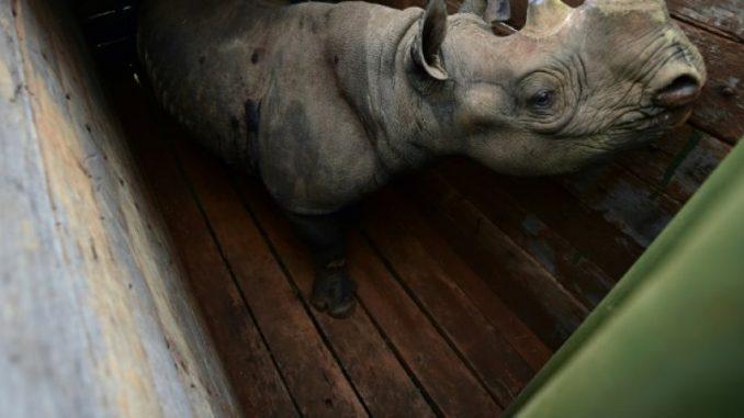 Kenya: sept rhinocéros morts après avoir été changés de parc
