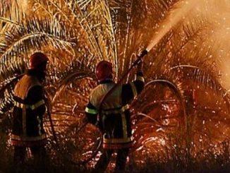 Algérie: Pas moins de 1.953 palmiers brulés durant le 1er semestre de 2018