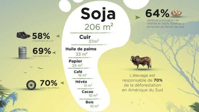 L'empreinte forêt nette est calculée en multipliant le volume de consommation par la surface brute nécessaire pour la production (emprunte brute), pondérée par le risque de déforestation. Ainsi, l'empreinte brute du bois et du papier est assez importante, mais ces produits proviennent davantage de forêts gérées durablement que du soja ou de l'hévéa. © Envol Vert
