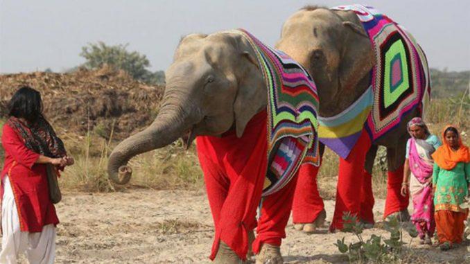 Le premier hôpital spécialisé en Inde pour les éléphants