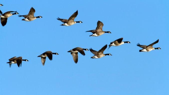 Argentine: Signature d'un accord portant sur la protection des oiseaux migrateurs